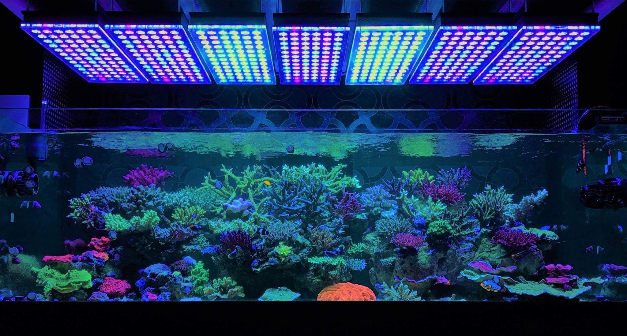 Reef Tank Led Lighting