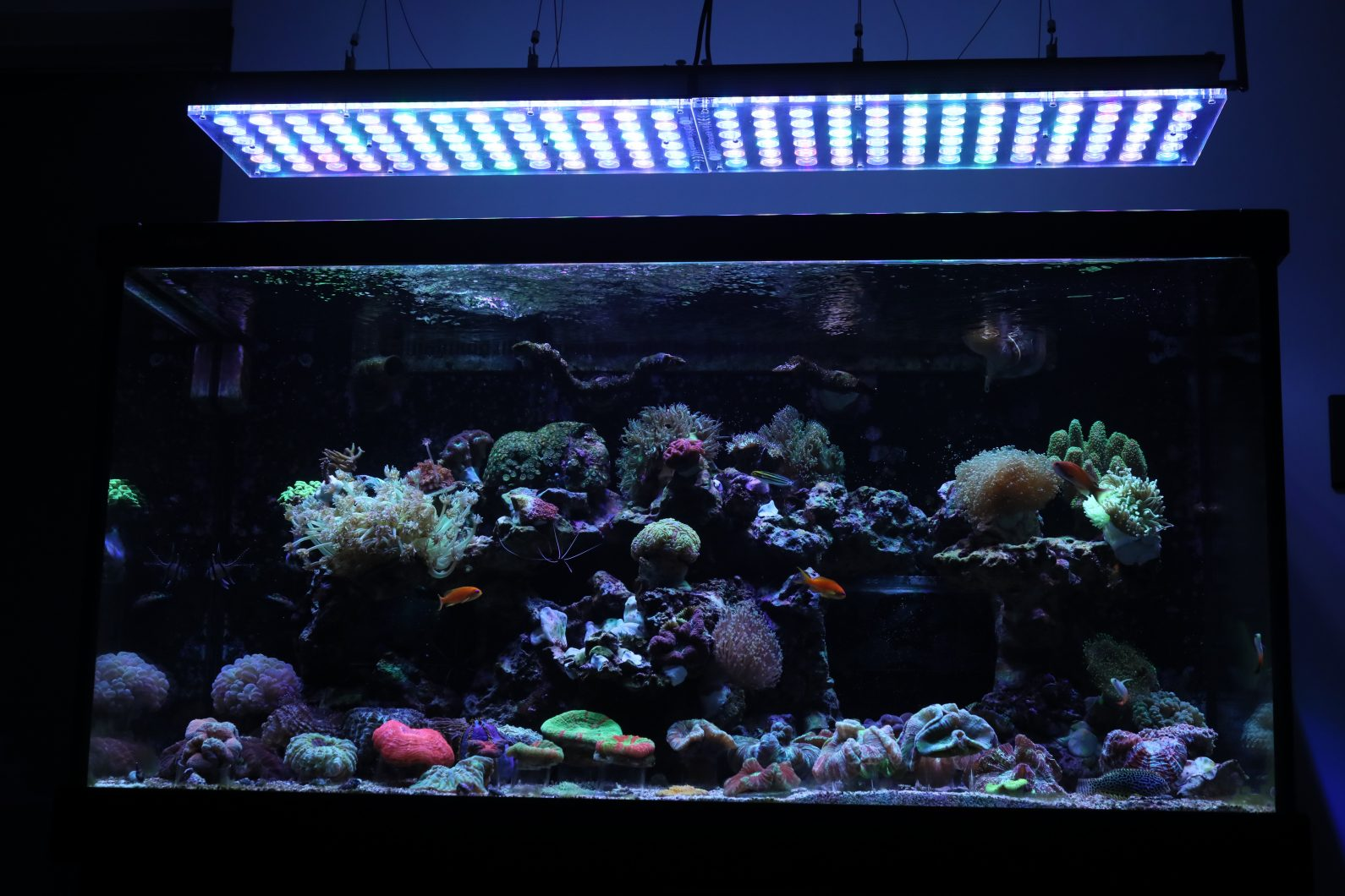 Led Coral Lighting