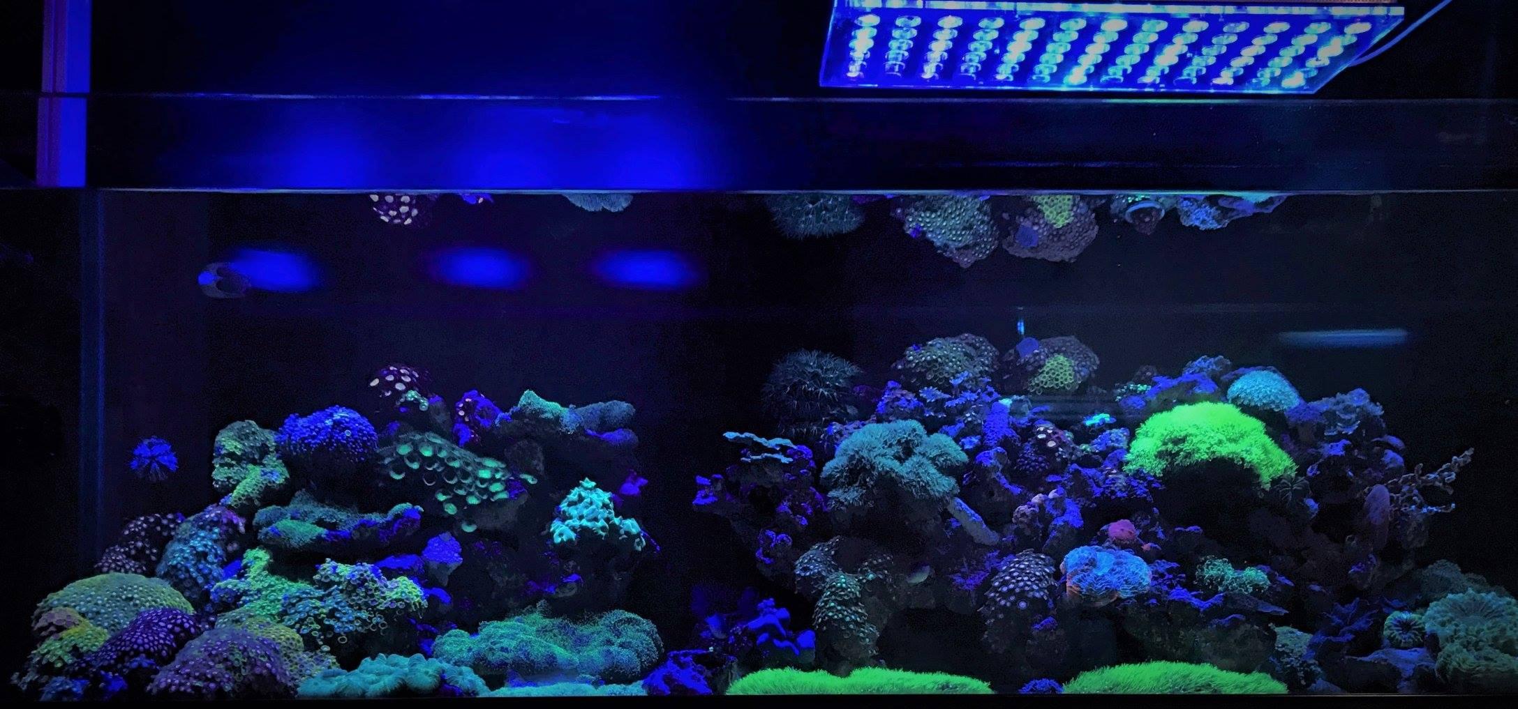 Reef Tank Led Lighting