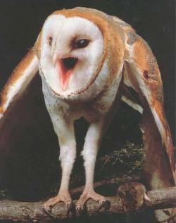 Barn - Owls of the Niagara Region