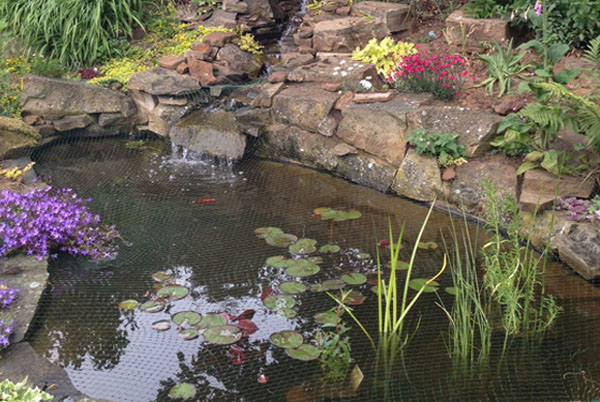 Backyard Fish Ideas Pond