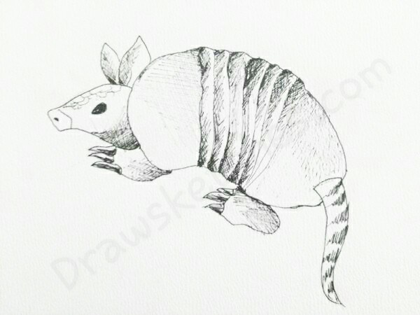 how to draw an armadillo # 18