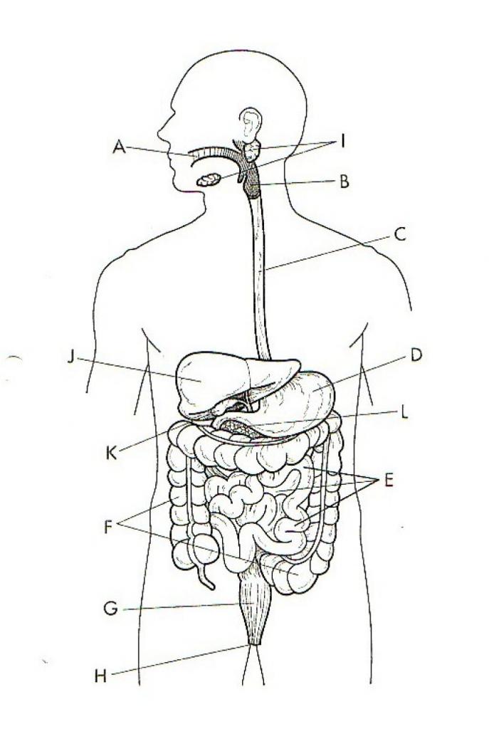 Urinary Diagram