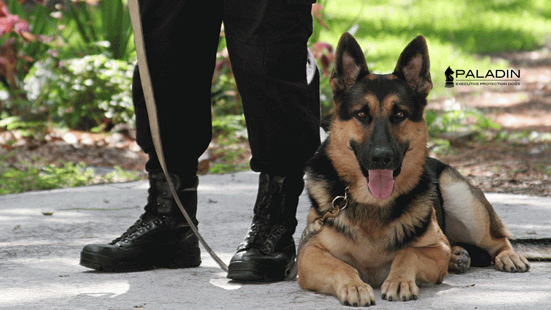 Executive Security Training