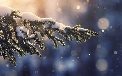 mk28-snowing-tree-blue-christmas-winter-nature-mountain ...