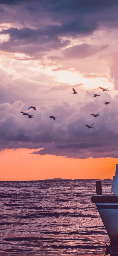 mu50-sea-sunset-birds-sky-ocean-ship-nature-flare - Papers.co
