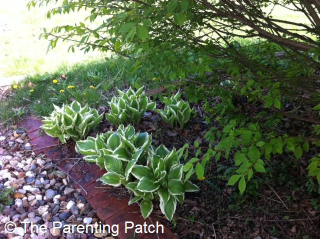Tips for Flower Planting in the Shade   Parenting Patch Flowers in the Shade