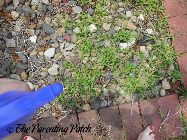 Killing Garden Thistles