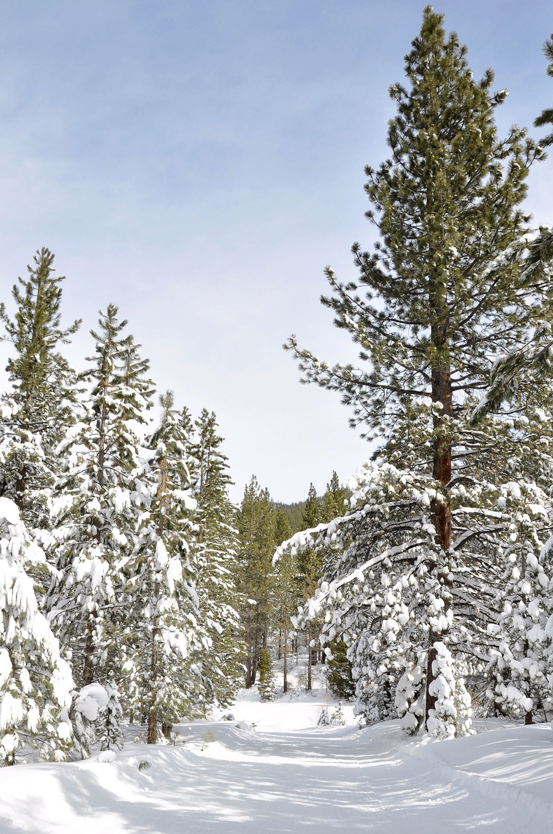 Natural Resources And Climate For Lake Tahoe Nevada State