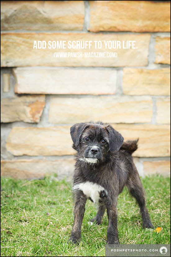 Toronto Dog Photographer Inspiring Dog Quotes Pawsh Magazine