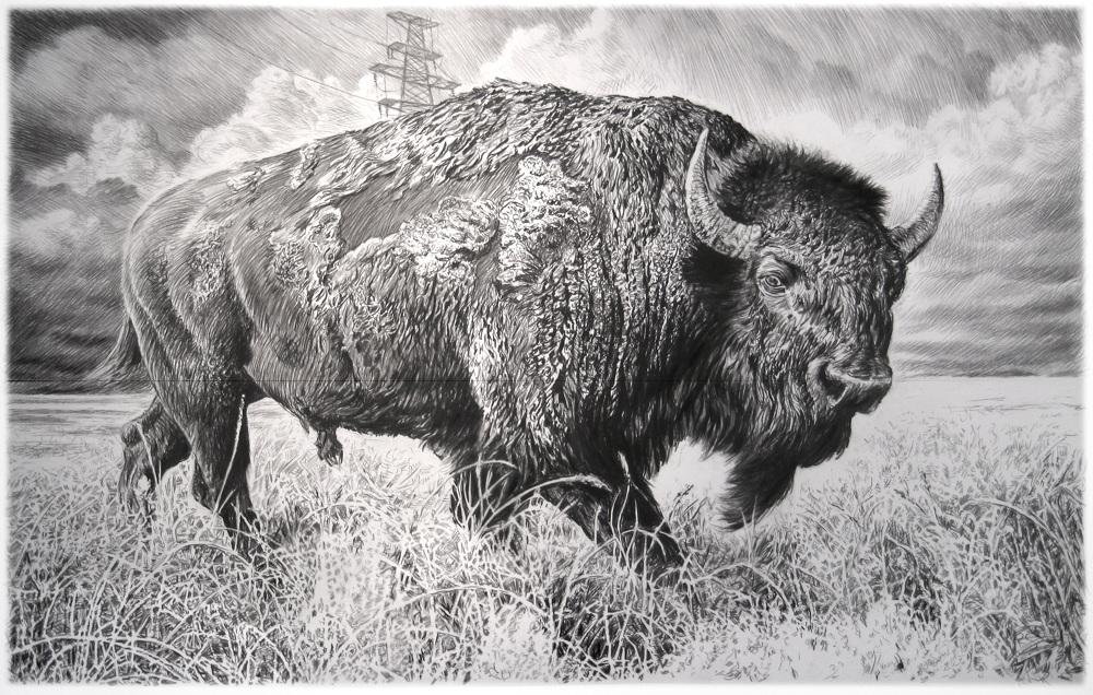 American Bison Series Rick Shaefer