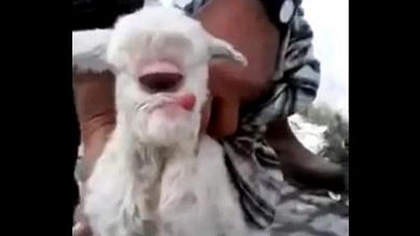 Turkey Sheep Half Human