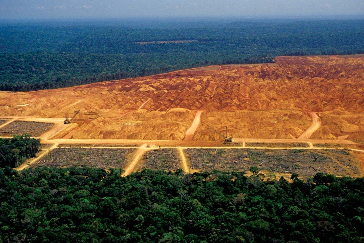 amazon rainforest deforestation - HD2000×1049