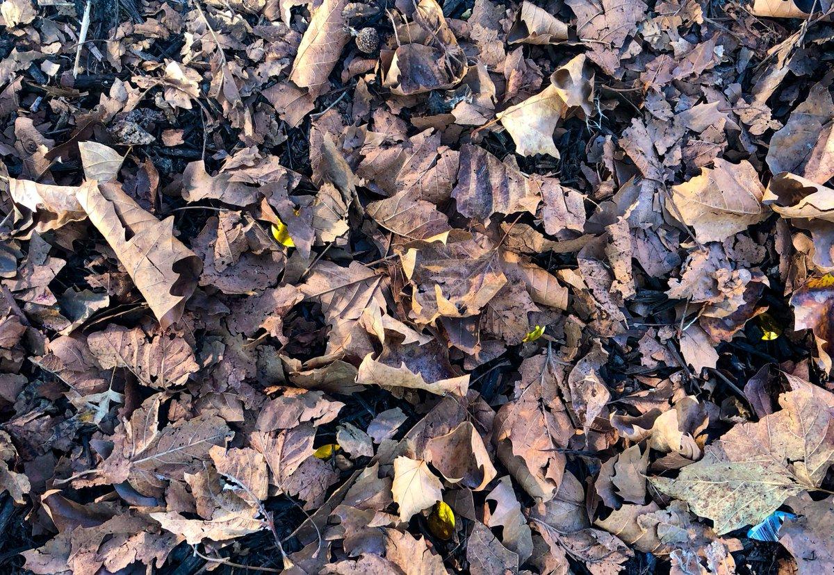 pile of leaves - HD1200×828