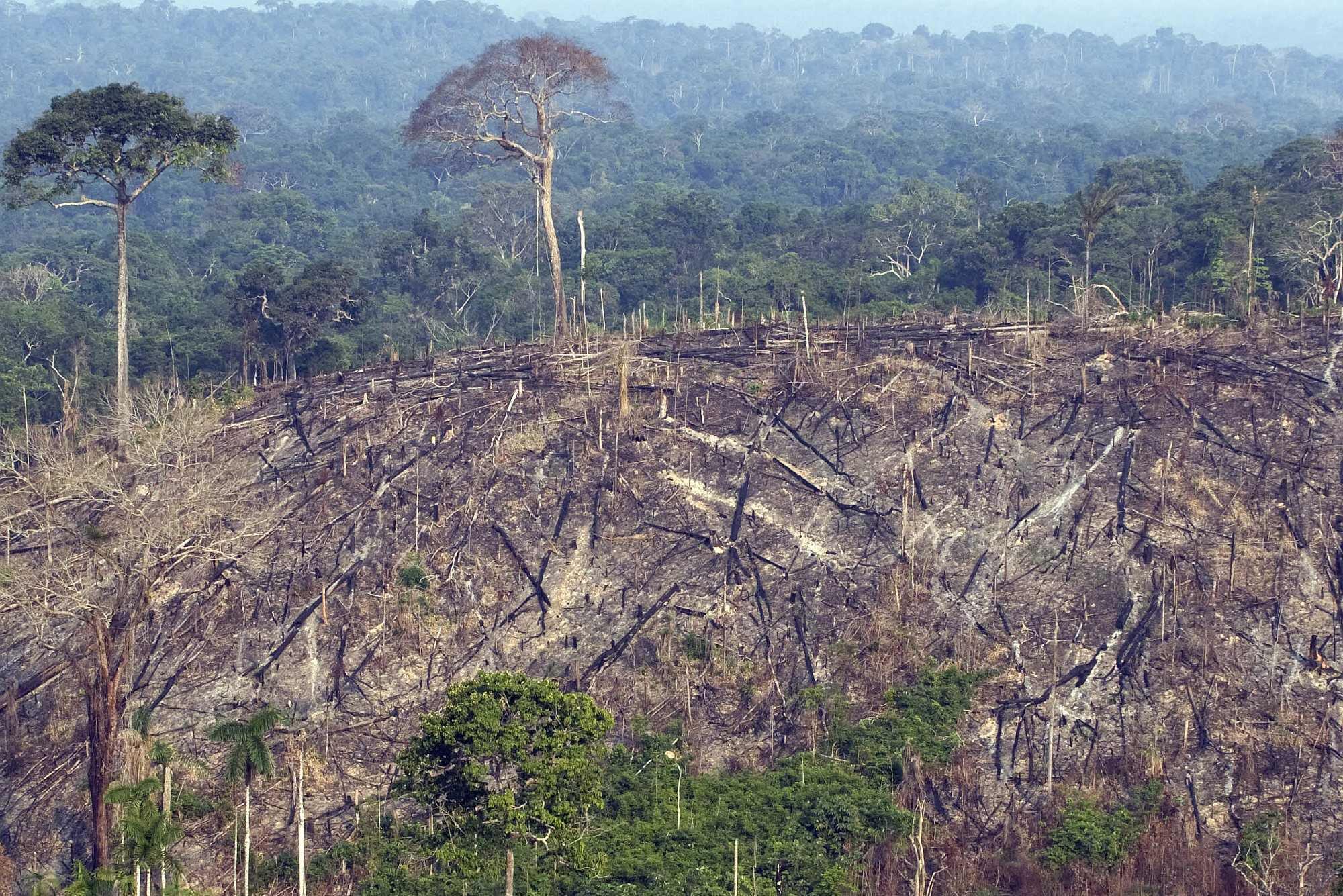 amazon rainforest deforestation - HD2319×1944