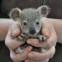 Baby Animals (@BBAnimals )