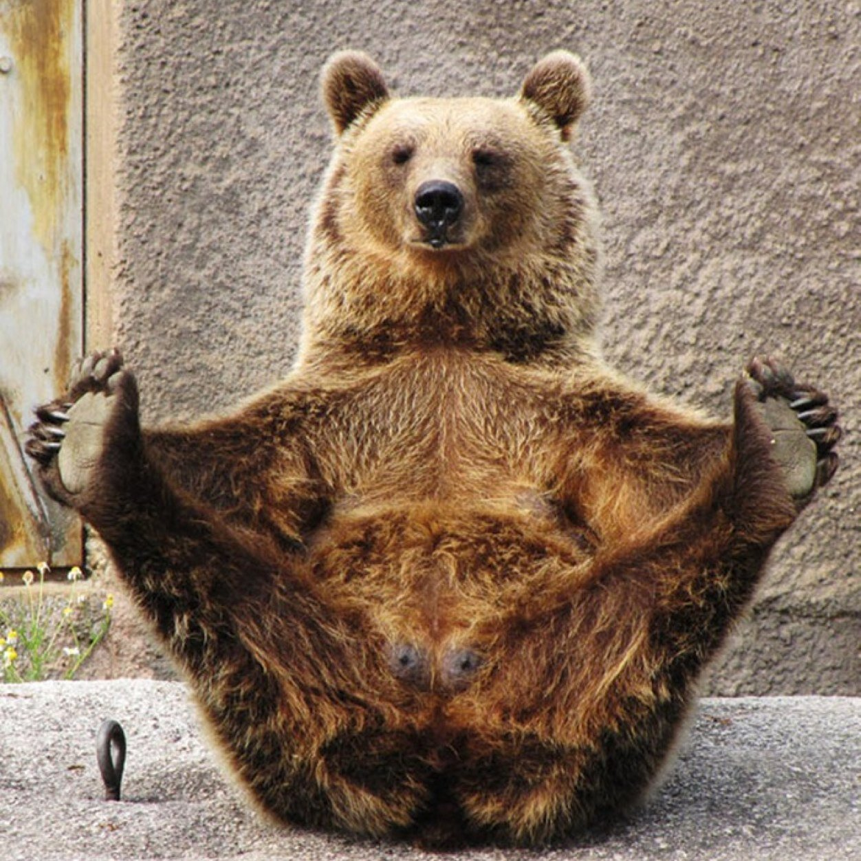 bear wrongs patiently pictures - 768×778