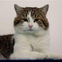 Larry the Cat (@Number10cat )