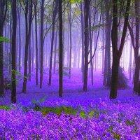 Deep Purple (@DeepPurple007 )