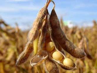 Soy allergy is a contraindication