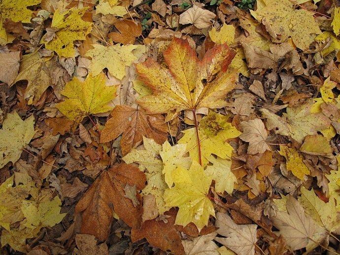 Should You Mulch Fall