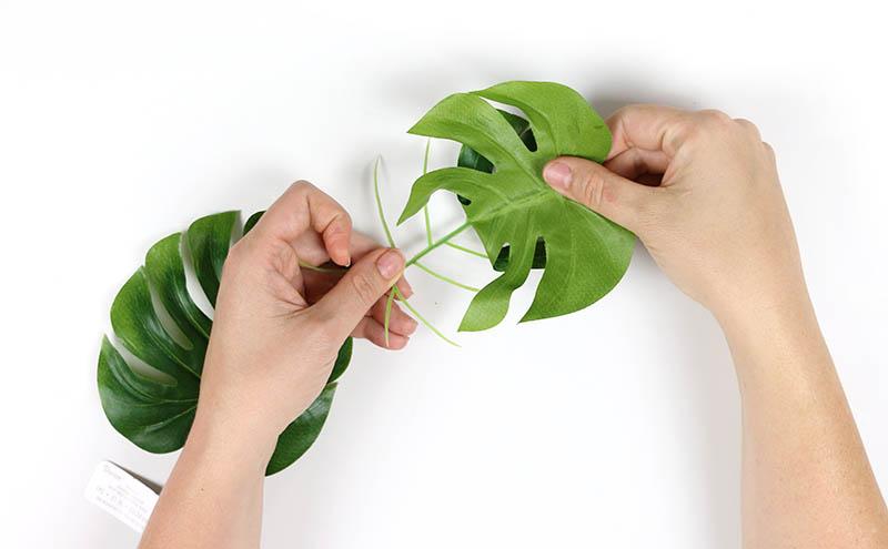 take off leaves
