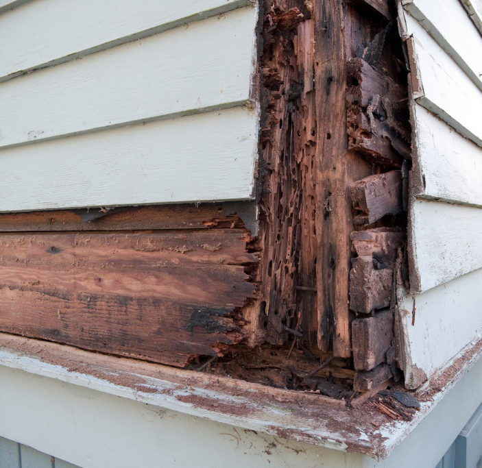 Difference Termites Drywood Termites Ground