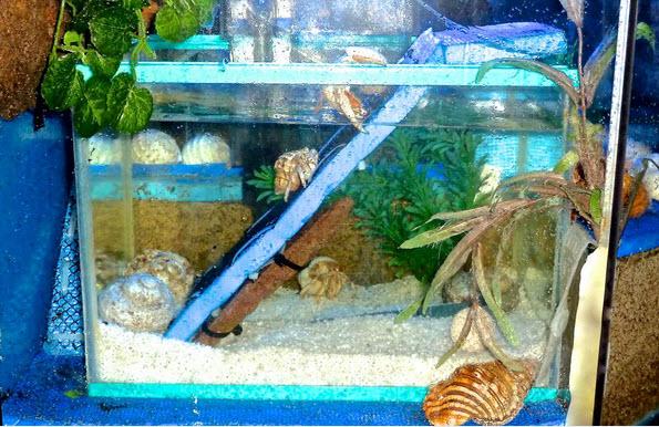 Diy Hermit Crab Habitat Ideas