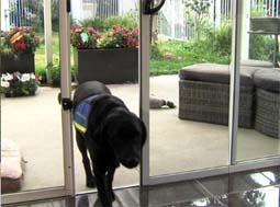 America S Choice For Pet Doors Best Dog Door And Pet