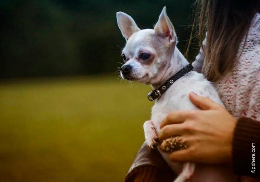 Модную и популярную собачку можно назвать именем бренда