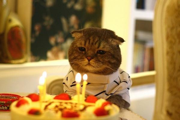 Cara menentukan usia kucing