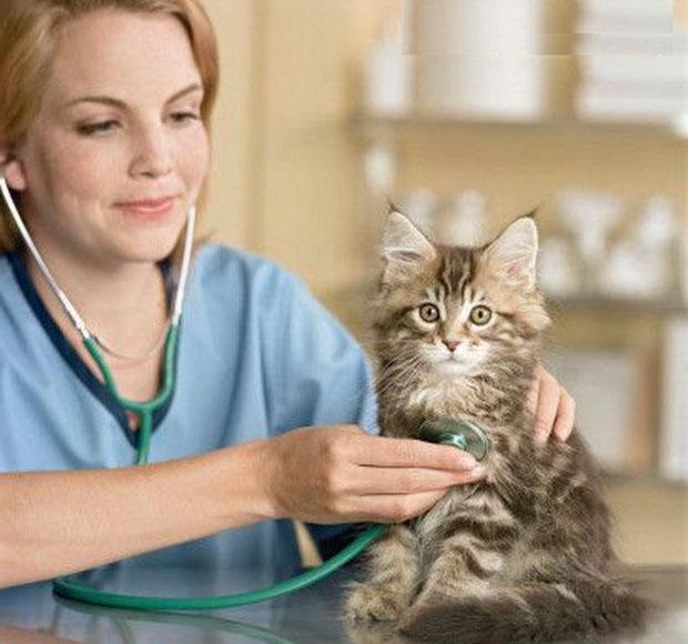 Setiap usia kucing diasumsikan pendekatannya dalam memilih kompleks vitamin dan obat-obatan.