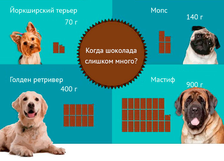 개를위한 초콜릿의 위험한 복용량