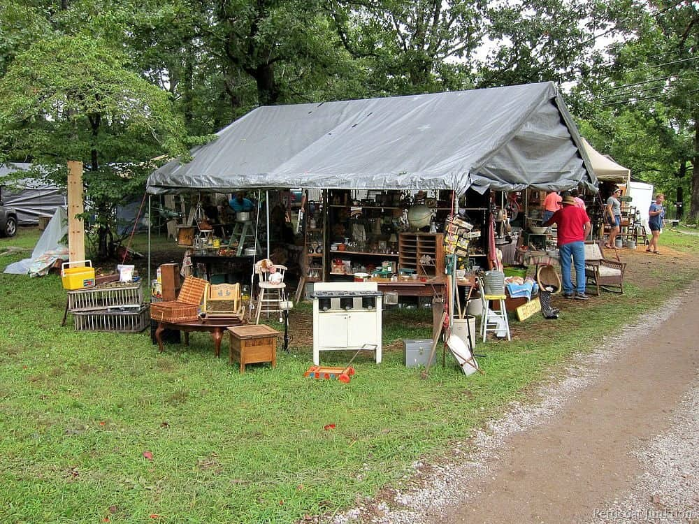 Pond Lily Pads Sale