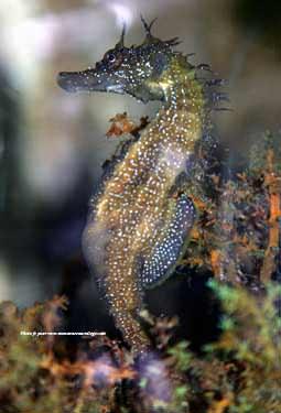 Hippocampe Cheval De Mer Www Monanneeaucollege Com