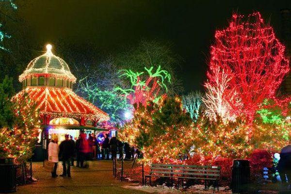 Zoo Lights Chicago