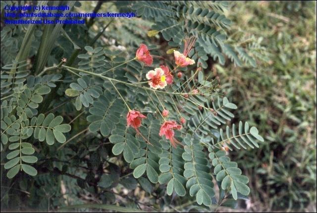Orange Flowered Shrubs Florida