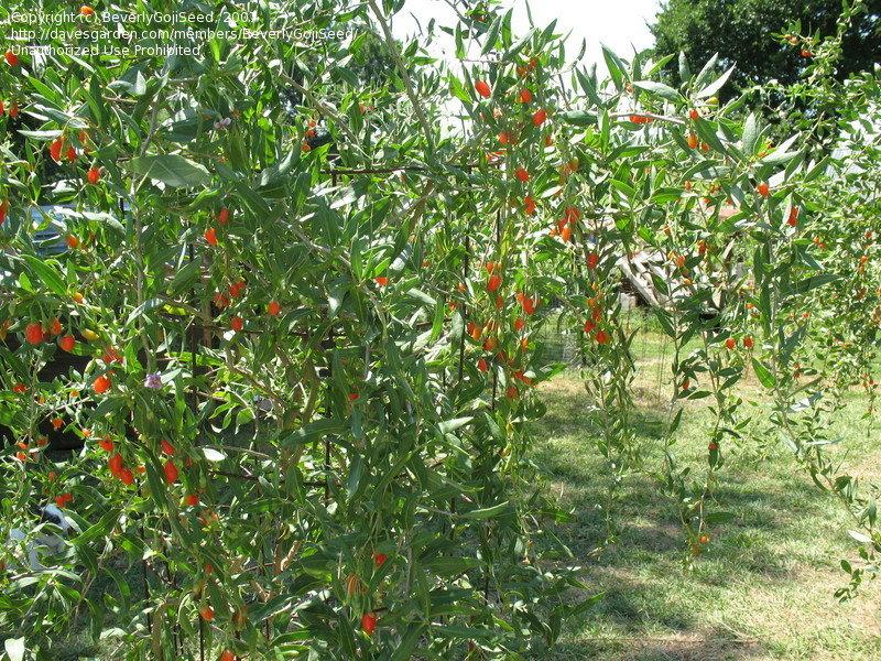 Avocado Tree Growing Zones