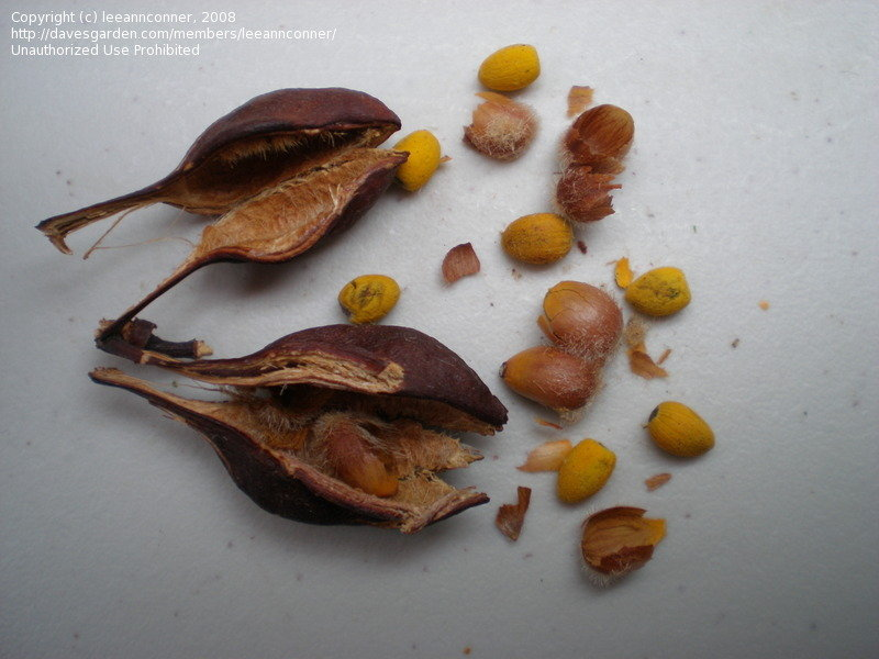 Small Seed Pod Identification