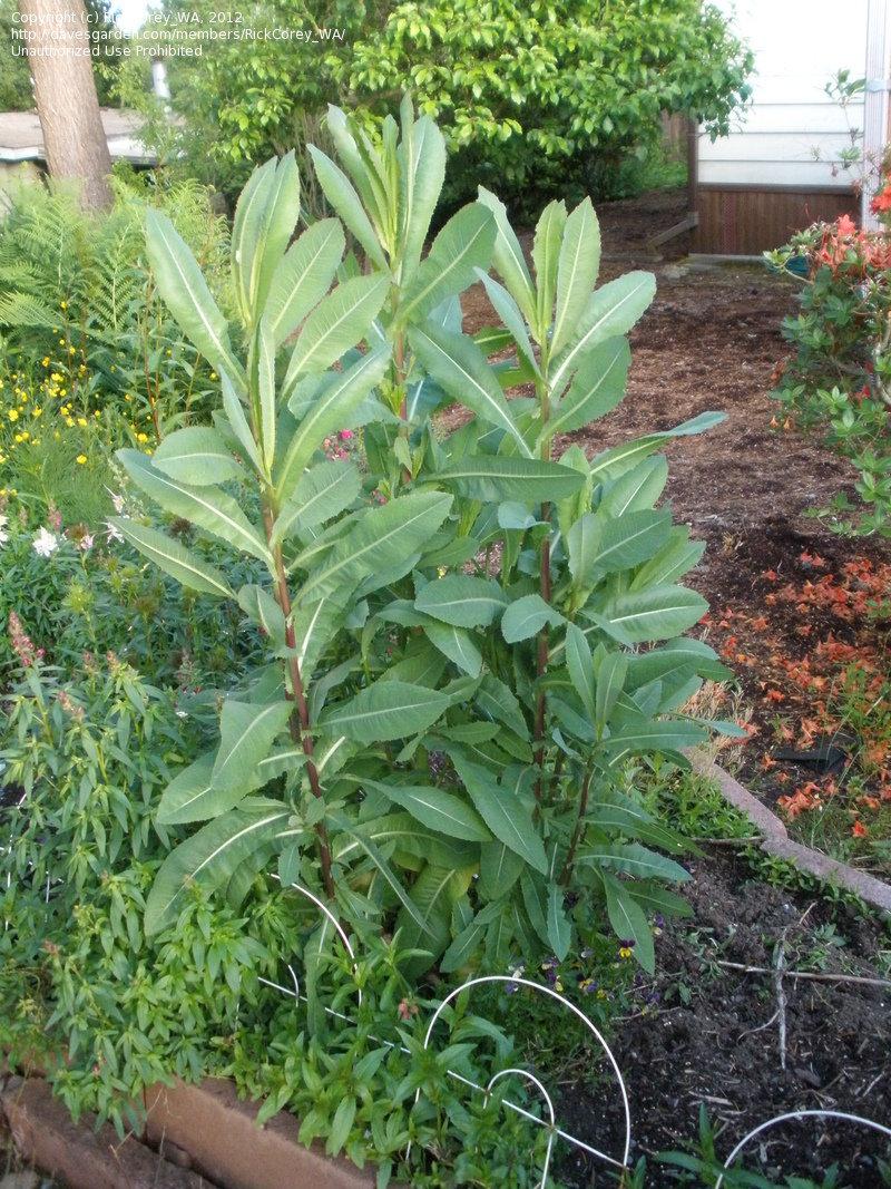 Tall Leafy Plant