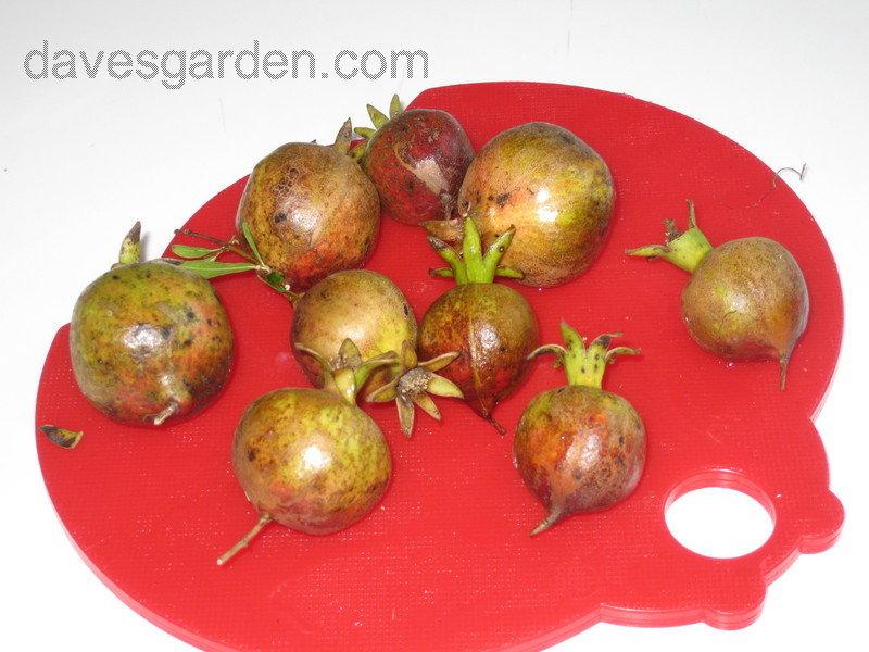 Az Fruits Month Season
