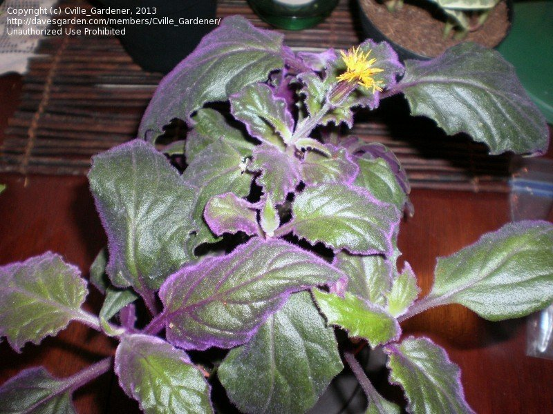 Trailing Plants Shade