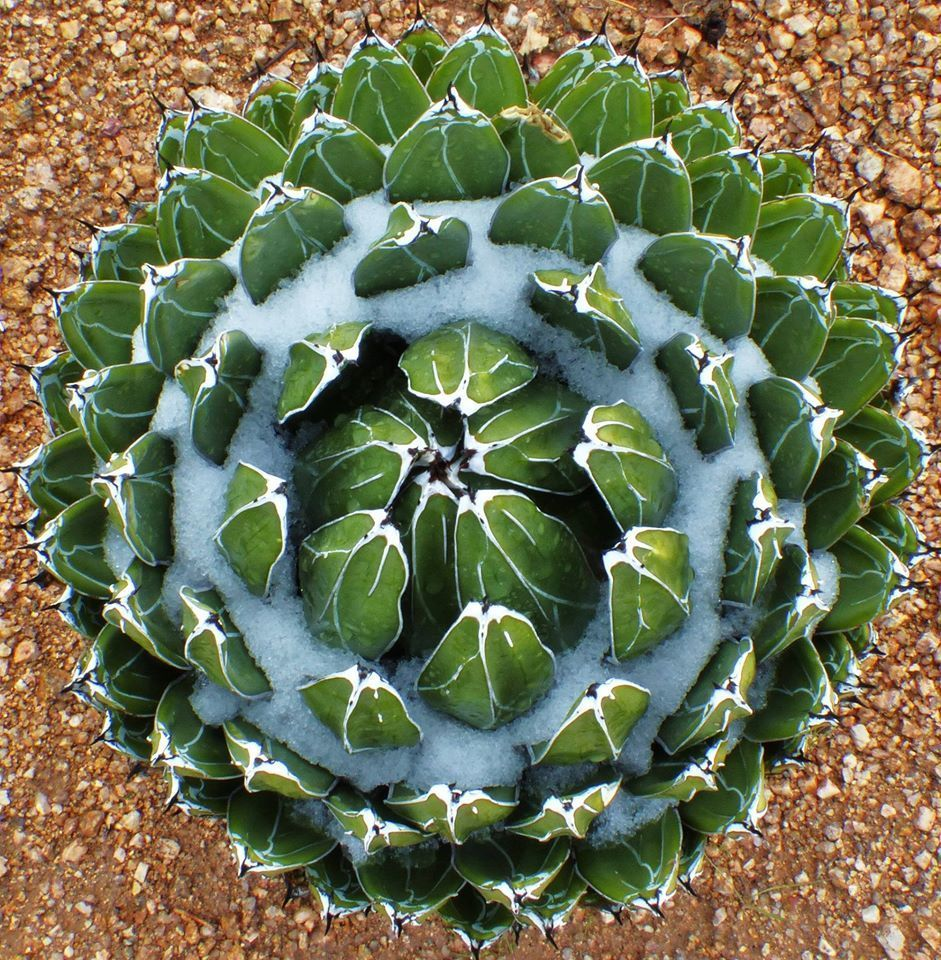 Garden Ann Mi Botanical Arbor
