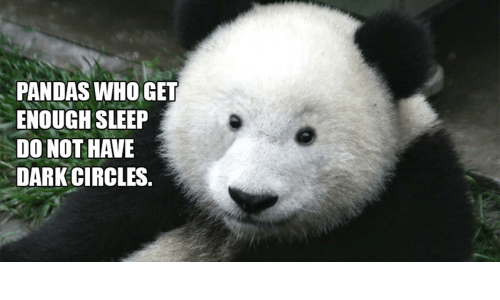 PANDAS WHO GET ENOUGH SLEEP DO NOT HAVE DARK CIRCLES ...