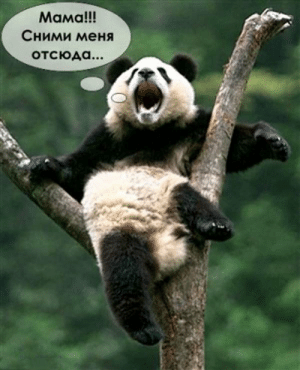 Pandas Try to Sit Alone When They Are Sad Meme-Arsenal Ru ...