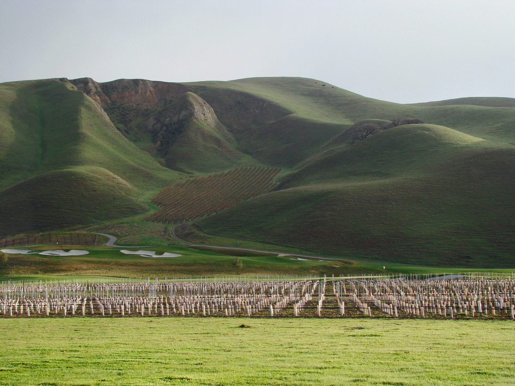 Livermore Ca Wente Vineyards Photo Picture Image