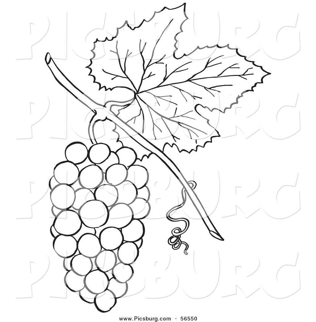 Grapes Bunch Of Printable Outline