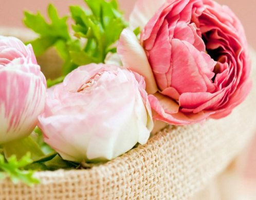 25 Types of Flowers to Plant for Summer   Summer Flowers   Total     Peonies   Types of Summer Flowers
