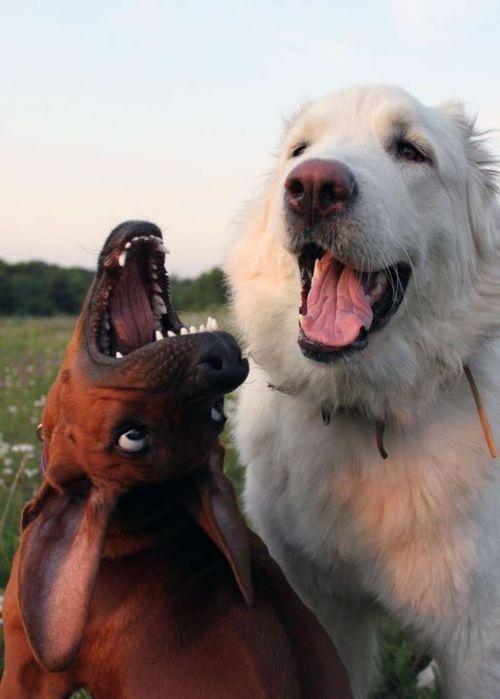 Weird Dog Pictures Animals