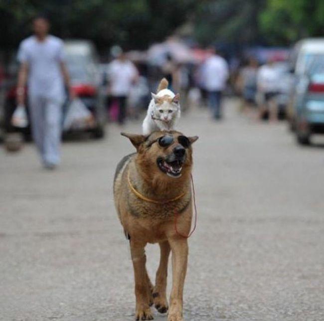Random Dogs Animals